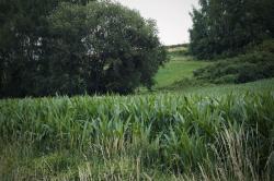 Versteckt im hohen Gras: Der DDR-Grenzpfosten