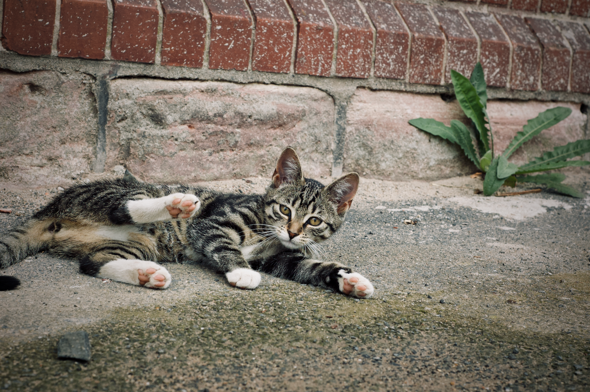 Eine Katze grüßt in Wenigentaft